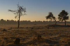 Lever de soleil avec des arbres Photo libre de droits