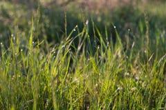 Lever de soleil avec des baisses d'herbe et d'eau Image stock