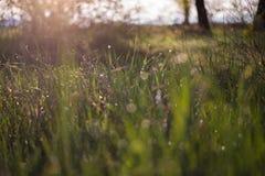 Lever de soleil avec des baisses d'herbe et d'eau Photographie stock libre de droits