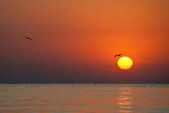 Lever de soleil avec des mouettes Images stock