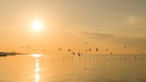 Lever de soleil avec des mouettes chez Bangpu, Thaïlande Photographie stock libre de droits
