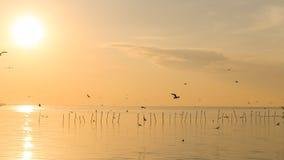 Lever de soleil avec des mouettes chez Bangpu, Thaïlande Image stock