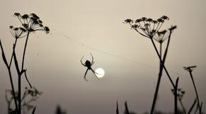 Lever de soleil avec l'araignée d'argiope Photos stock