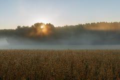 Lever de soleil avec le brouillard sur le champ Photo libre de droits