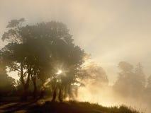 Lever de soleil avec le tress sur le rivage du lac Image libre de droits