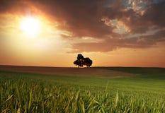 Lever de soleil avec les arbres isolés Photos stock