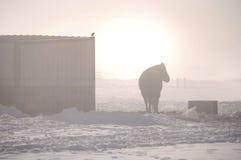 Lever de soleil avec un cheval Photos stock