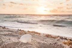 Lever de soleil blanc de Shell On The Beach At image stock