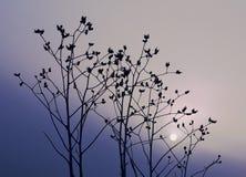 Lever de soleil bleu Photographie stock libre de droits