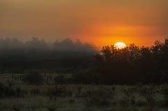 Lever de soleil brumeux Image stock
