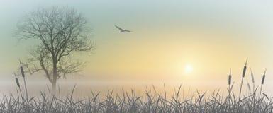 Lever de soleil brumeux Photographie stock libre de droits