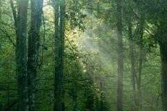 Lever de soleil brumeux dans la forêt Photographie stock libre de droits