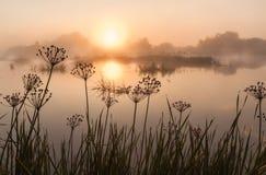 Lever de soleil brumeux sur une petite rivière photographie stock