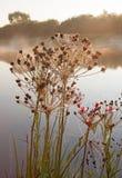 Lever de soleil brumeux sur une petite rivière Image stock