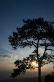 Lever de soleil chez Phu Kradueng, Loei, Thaïlande Photos libres de droits