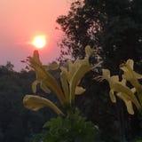 Lever de soleil chez Phu Rua, Loei, Tha?lande photo stock