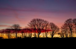 Lever de soleil coloré avec des silhouettes des arbres image libre de droits