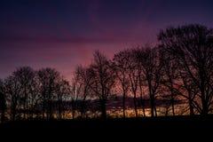 Lever de soleil coloré avec des silhouettes des arbres photo stock