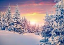 Lever de soleil coloré d'hiver dans la forêt de montagne Photographie stock libre de droits