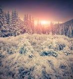 Lever de soleil coloré d'hiver dans les montagnes Photographie stock libre de droits