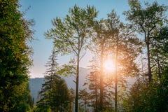Lever de soleil de coucher du soleil en montagnes Forest Landscape d'été Sun Sunshin photo libre de droits