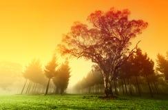 Lever de soleil croquant de forêt Image stock