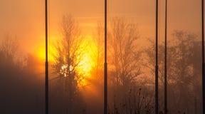 Lever de soleil, dépassement léger par les branches image stock
