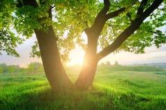 Lever de soleil d'été au-dessus de pré vert Photos libres de droits