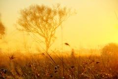Lever de soleil d'arbre et d'herbe de gomme Photographie stock libre de droits