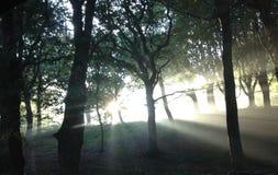 Lever de soleil d'automne dans les régions boisées images libres de droits