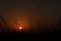 Lever de soleil d'or avec les usines silhouettées photos stock