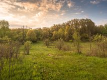 Lever de soleil d'or entrant de matin au-dessus de Forest Patway photos stock