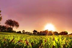 Lever de soleil d'herbe Image stock