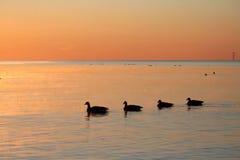 lever de soleil d'oies Photo stock