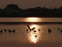 Lever de soleil d'oiseau images libres de droits