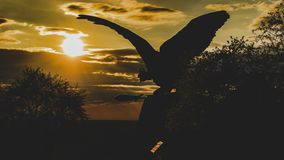 Lever de soleil d'oiseau de Turul dans le ¡ nya-Hongrie de Tatabà images libres de droits