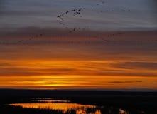 Lever de soleil d'oiseaux aquatiques Photos stock