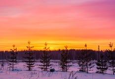 Lever de soleil dans des forêts d'hiver Image stock