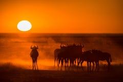 Lever de soleil dans Etosha Photographie stock