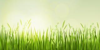 Lever de soleil dans l'herbe Image libre de droits