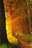 Lever de soleil dans la belle ruelle Photographie stock libre de droits