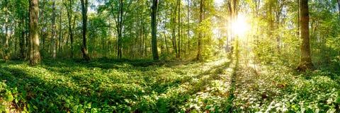 Lever de soleil dans la forêt photographie stock libre de droits