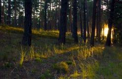 Lever de soleil dans la forêt Photographie stock