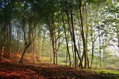 Lever de soleil dans la forêt Photos libres de droits