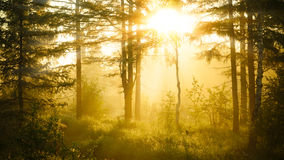 Lever de soleil dans la forêt brumeuse Photographie stock libre de droits