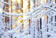 Lever de soleil dans la forêt d'hiver Photographie stock libre de droits