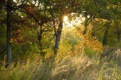 Lever de soleil dans la forêt de chêne Photo stock