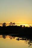 Lever de soleil dans la jungle Photographie stock libre de droits