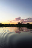 Lever de soleil dans la jungle, Bolivie Image libre de droits