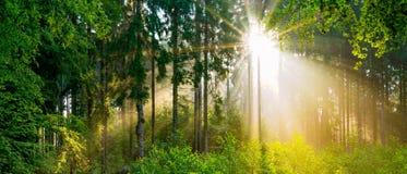 Lever de soleil dans la for?t photos stock